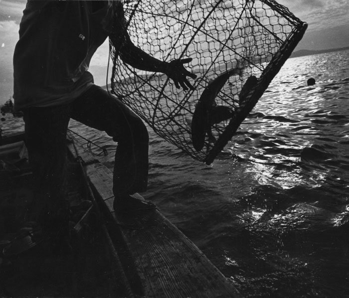 Fishing in Minamata Bay
